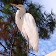 Elegant White Crane Poster