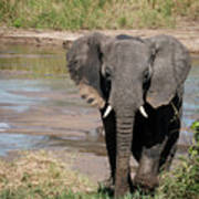 Elephant At The River Poster