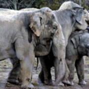 Elephant Family Poster