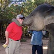 Elephant Kissing Man Holding Bananas Poster