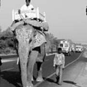 Elephant Road Traffic Poster