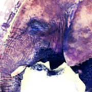 Elephant Watercolor Painting Poster
