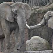 Elephants Playing 3 Poster