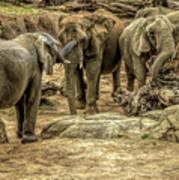 Elephants Social Poster