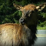 Elk Crossing Poster