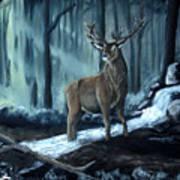 Elk In The Morning Poster