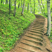 Empire Bluffs Trail Steps In Michigan Poster