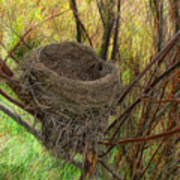 Empty Nest In Autumn Poster