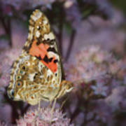 En Garde - Painted Lady - Butterfly Poster