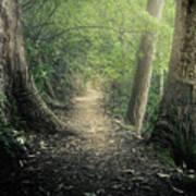 Enchanted Forrest Poster