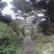 Enchanted Path Poster