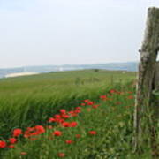 England Sussex Poppy Field Poster