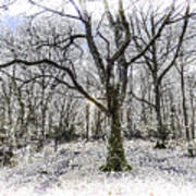 English Forest Snow Art Poster