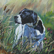 English Pointer In The Field Poster