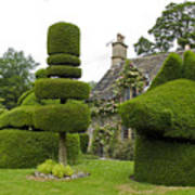 English Yew Topiary Poster
