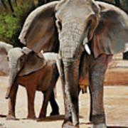 Elephant Walk Poster