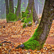 Enjoying The Forest Of Oak Run Poster