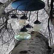 Enlightened Birch Trees Poster