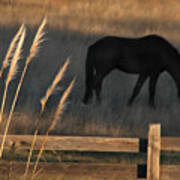 Equine Evening N. California Poster
