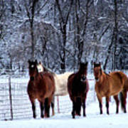 Equine Winter Poster