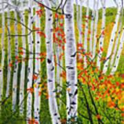 Erin's Birch Trees Poster