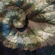 Escargot Begonia Poster