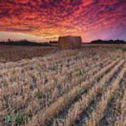 Essex Hay At Sunrise Poster