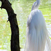 Ethereal Snowy Egret Poster