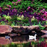 Ethreal Beauty At The Azalea Pond Poster