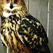 Eurasian Eagle-owl With Oil Painting Effect Poster