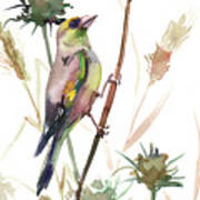 European Goldfinch In The Field Poster
