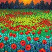 Evening Poppies Poster