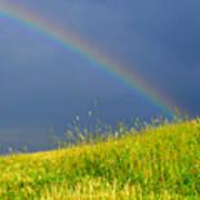 Evening Rainbow Over Pasture Field Poster