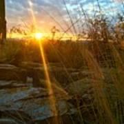 Evening Sun Rays In The Desert Poster
