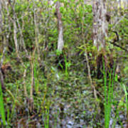 Everglades Swamp Two Poster
