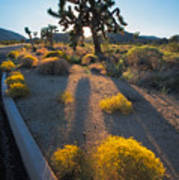 Every Moment Joshua Tree National Park Poster