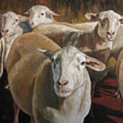Ewes In The Paddock Poster