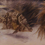 Example Of First Underwater Photography Poster by W. H. Longley And Charles Martin
