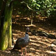 Exotic Bird 2 Poster