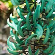 Exotic Jade Vine Poster