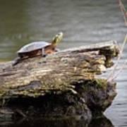 Exploring Turtle Poster