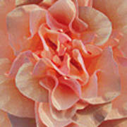 Expressionist Rose Poster