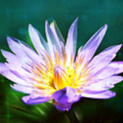 Exquisite Waterlily Poster