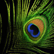 Eye Of A Peafowl Poster