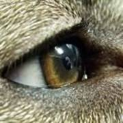 Eye Of The Canine Poster