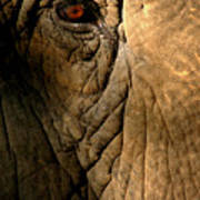 Eye Of The Elephant Poster