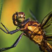 Eye To Eye Dragonfly Poster