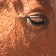 Eyelashes - Horse Close Up Poster