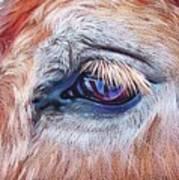 Eyelashes Poster