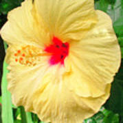 F12 Yellow Hibiscus Poster